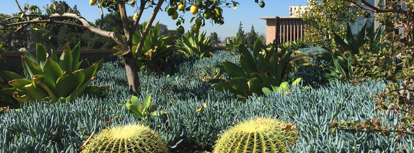 Succulent garden at Harvey Mudd College