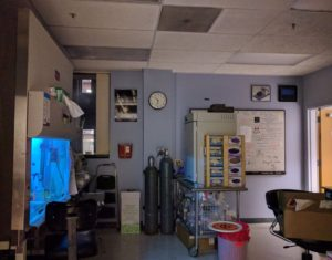 A lab hood, gas tanks, incubator, boxes of gloves, and a white board in the Orwin lab.
