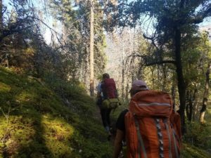Two students are seen hiking up a trail cutting through a fern covered grove. Both are carrying orange backpacks. On either side of the grove are small tress providing some shade from the sun.