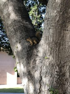 Side view of a squirrel perched on all four legs in the fork of a tree