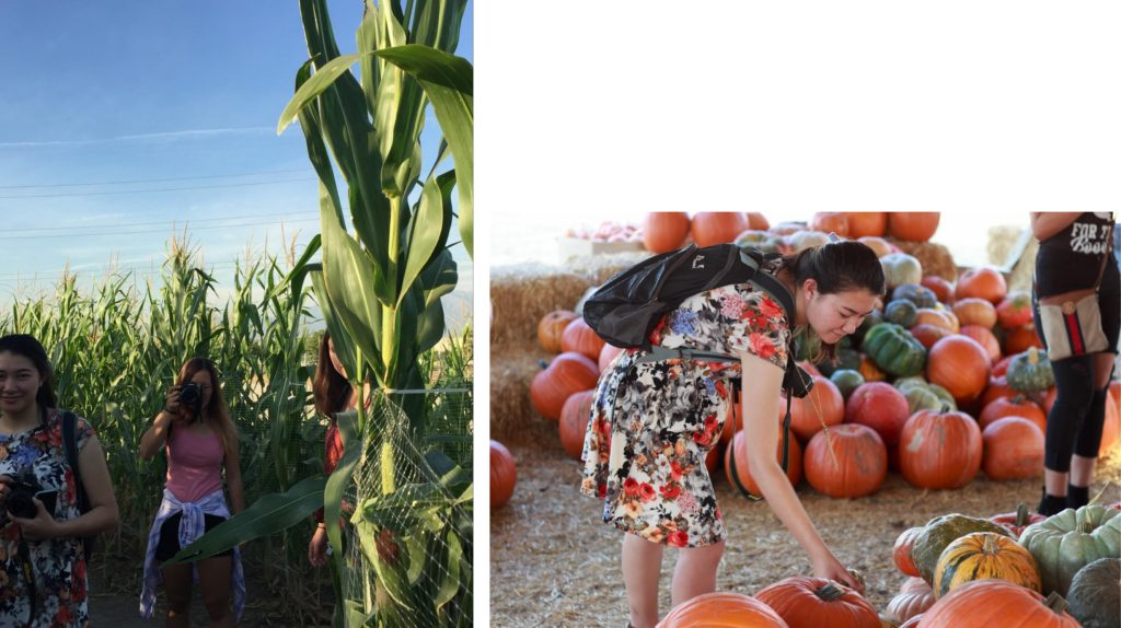 LEFT: three young women stand among tall green stalks of corn. RIGHT: a woman in a floral dress bends to look at a pile of multicolored pumpkins. Another pile of pumpkins is behind her.