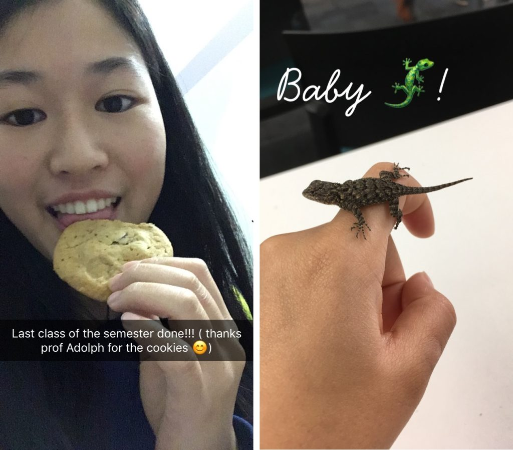 LEFT: A selfie of me eating a chocolate chip cookie. RIGHT: A baby lizard on a my finger.