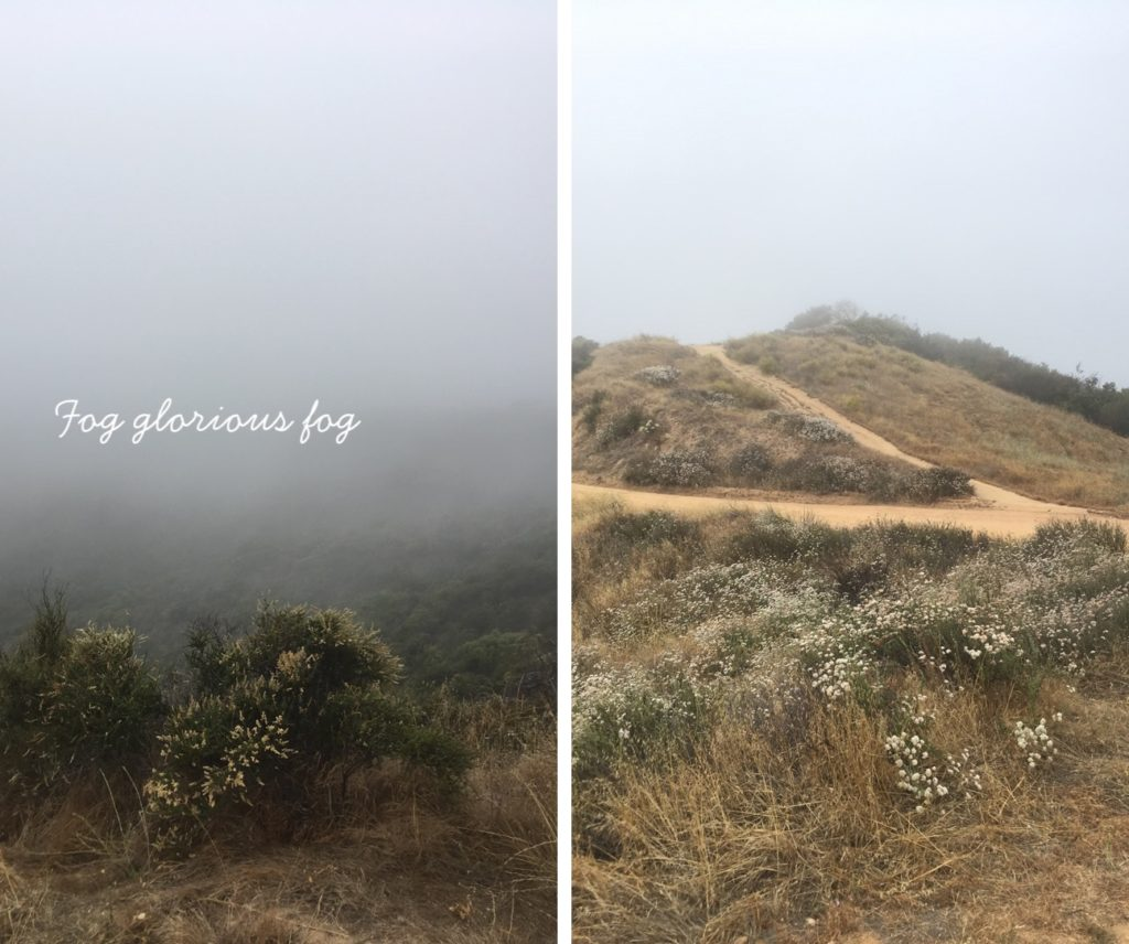 LEFT: A hillside disappearing into thick fog. RIGHT: A hillside with wildflowers and two hiking paths and a foggy sky in the background.