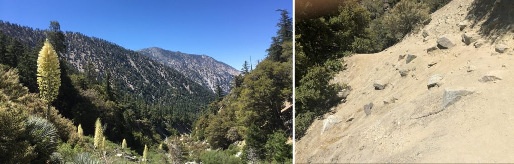 LEFT: Mountains with trees, shrubs, and tall yellow flowers. RIGHT: A slanted unpaved rocky path.
