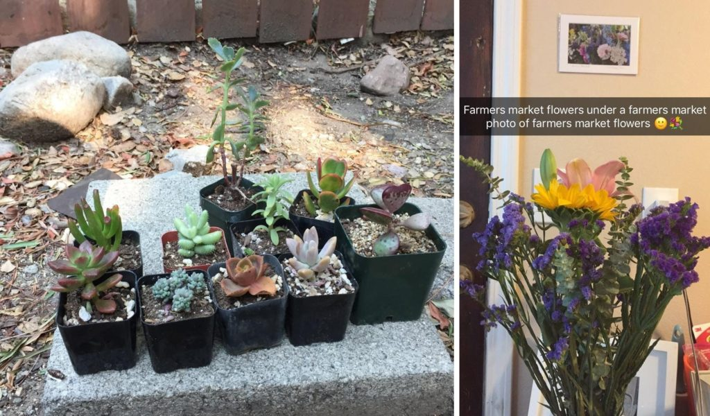 "Left: 10 different succulents in small pots are arranged in two rows on a cement block Right: A bouquet of different types of flowers sits under a photo of flowers. The caption reads ""Farmers market flowers under a farmers market photo of farmers market flowers"""