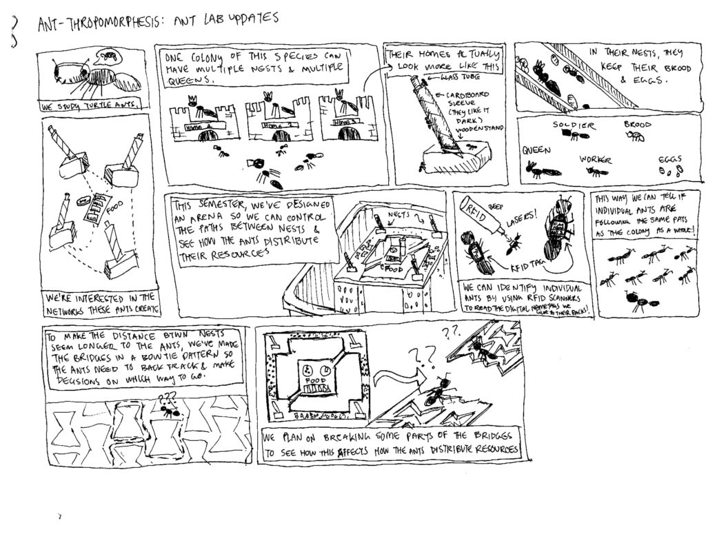 Hand-drawn comic explaining ant thropomorphesis research in Professor Matasci-Donaldson's lab. A single turtle ant colony can have multiple nexts and queens. The researchers have designed an arena so they can control the paths between nests to study how ants distribute resources between them. Individual ants are tagged with tiny RFID chips so they are able to compare individual behavior to colony behavior. Some paths in the arena are breakable, allowing for manipulation and experimentation.