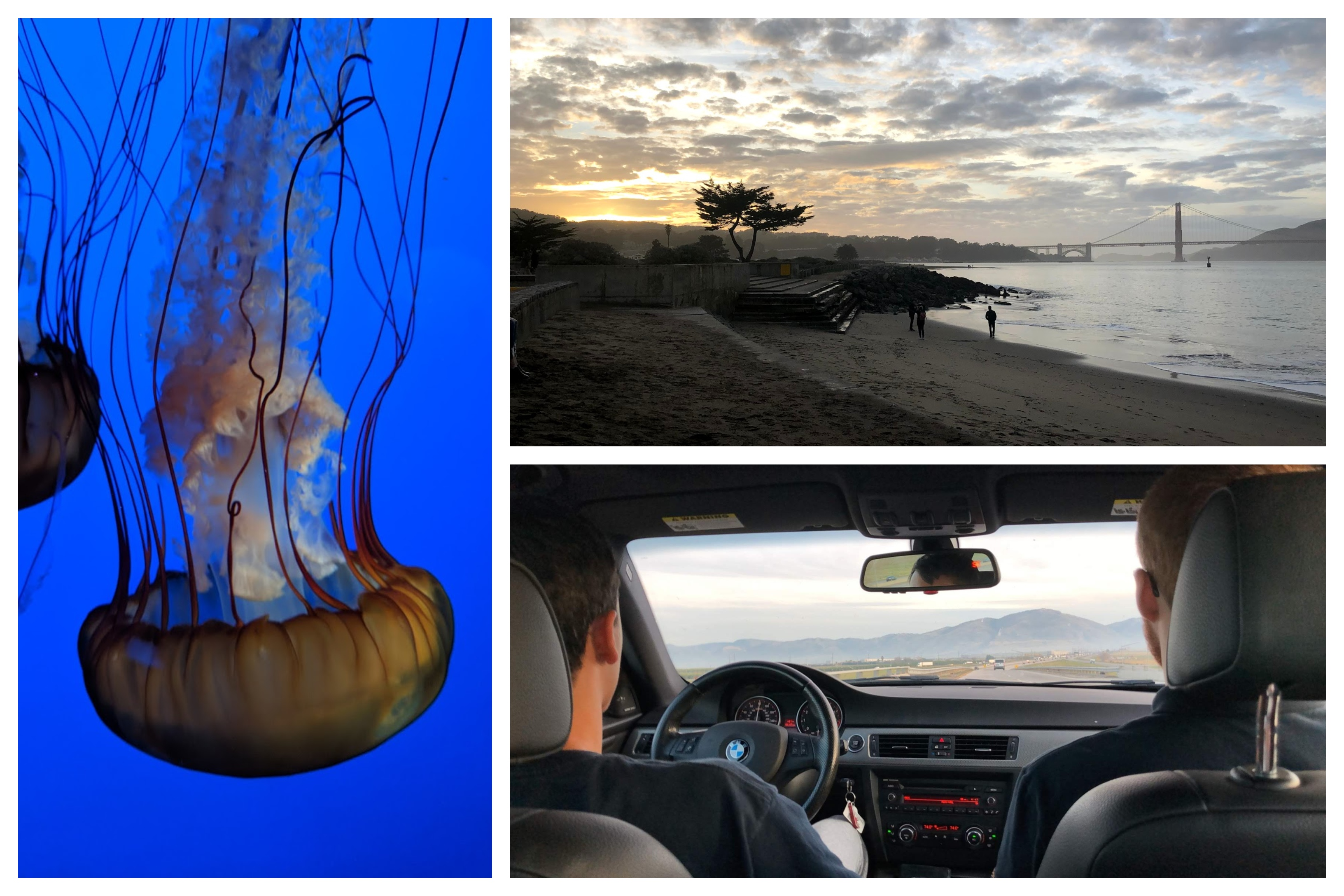 A jelly fish, photo of a sunset with the golden gate bridge in the background, and a photo of two guys in a car front row taken from the back row.