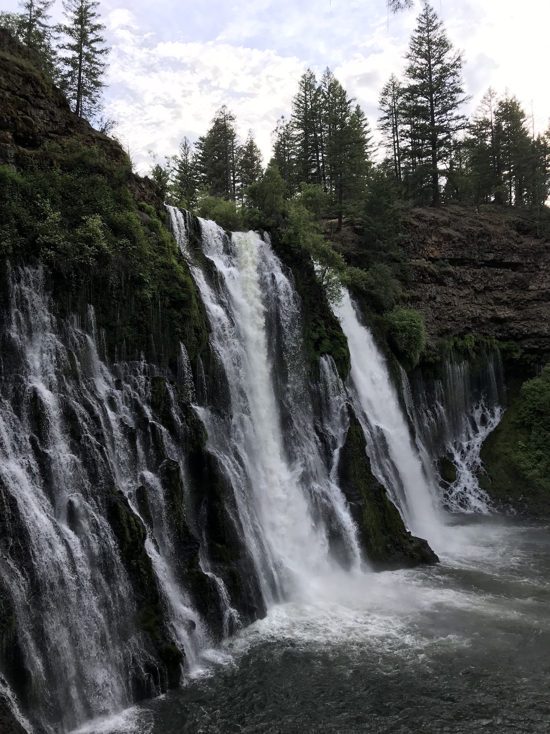 Several small waterfalls spill out of the side of a cliff. There are lots of evergreen trees surrounding the falls.