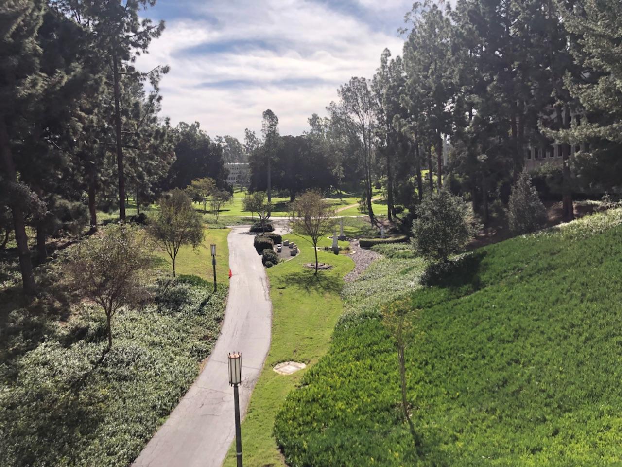 A path inbetween trees