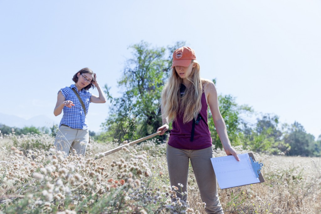 Students conduct research in a field.