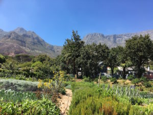 Oranjezicht City Farm, an urban farm in the upper suburbs of Cape Town.